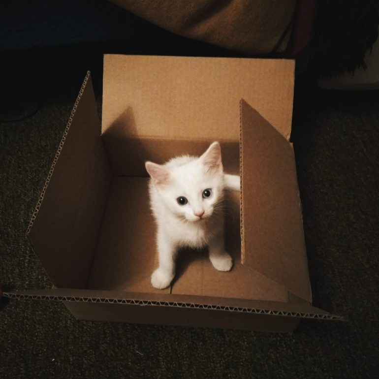 A white kitten in a moving box - finding the right moving boxes