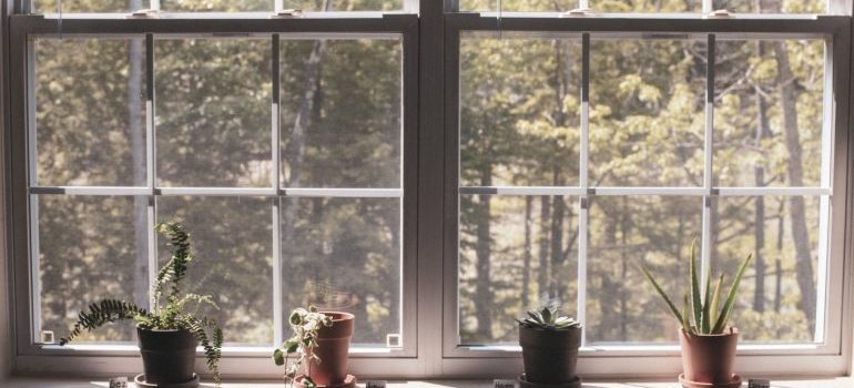A view at trees behind a window